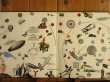 画像2: Led Zeppelin / Led Zeppelin III (2)